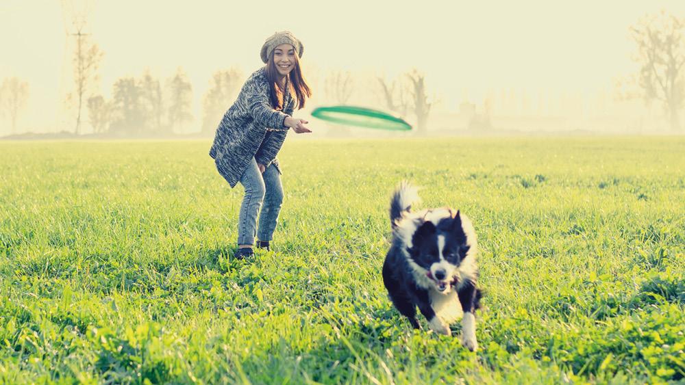 Esercizi per cani: aiutiamoli a restare in forma!