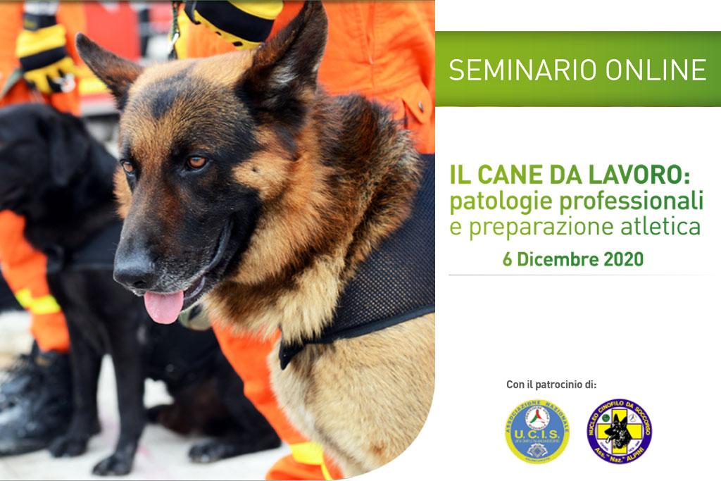 Malattie professionali nel cane da lavoro: un seminario per comprendere meglio come prevenirle e trattarle