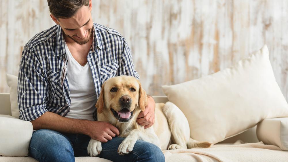 Osteoartrite nel cane: i sintomi per riconoscerla