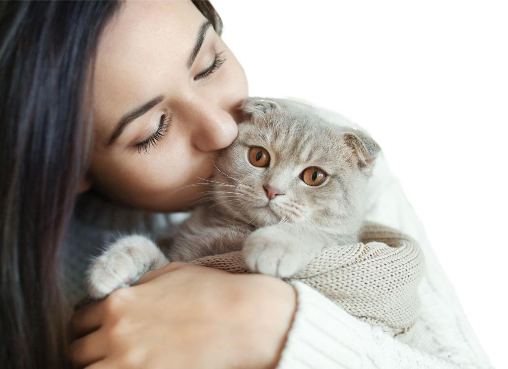 Osteoartrite nel gatto: i sintomi per riconoscerla