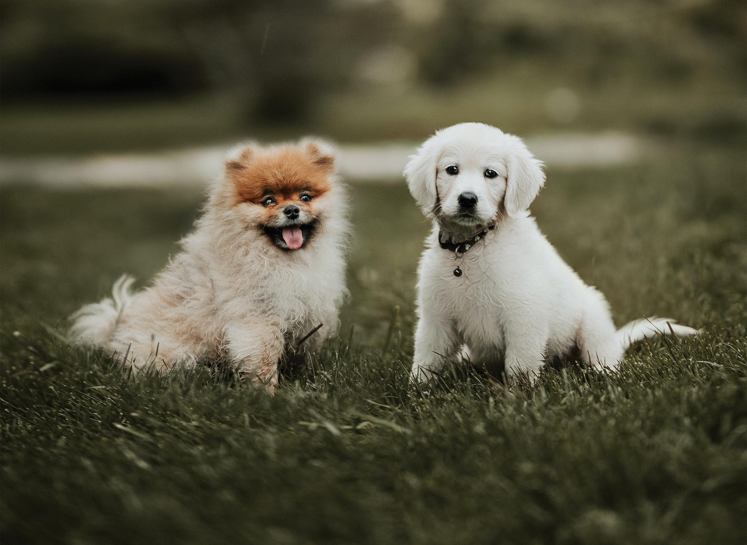 Osteoartrite: ci sono razze canine più a rischio?
