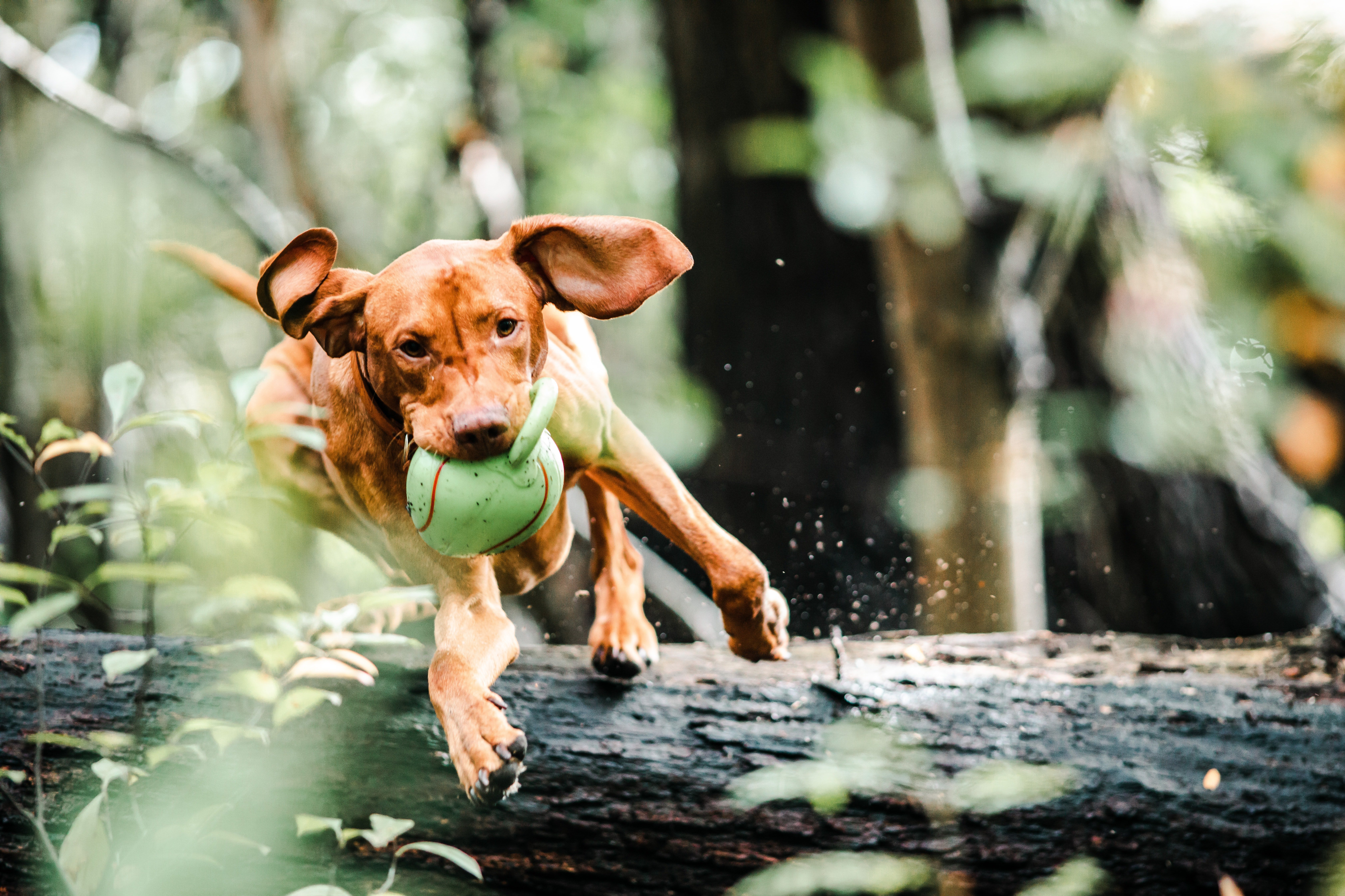 Articolazioni del cane: le patologie più comuni
